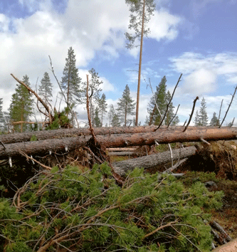 Kimmo Kulojärvi